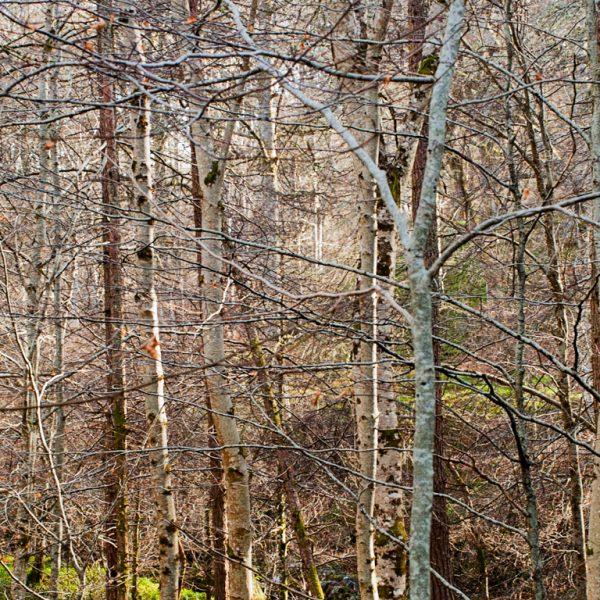 Cawdor Woods 3 - Jonathan Dredge