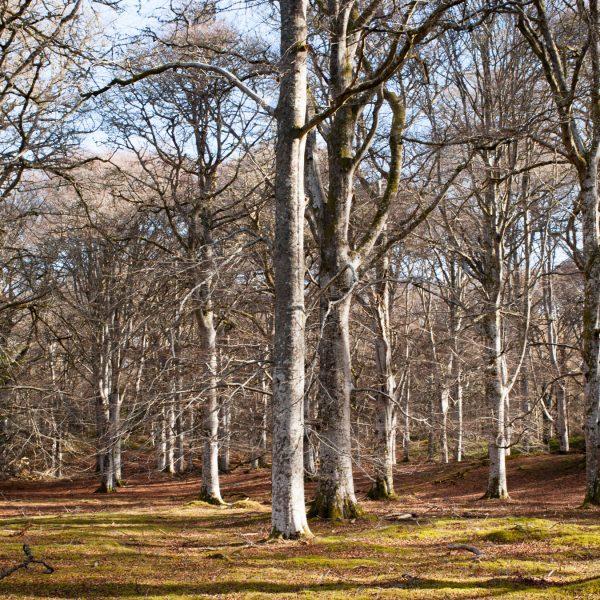 Cawdor Woods 6 - Jonathan Dredge