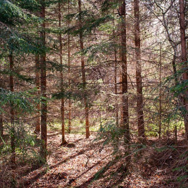 Cawdor Woods 9 - Jonathan Dredge