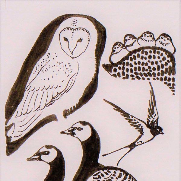 The Ornithologist - Sarah Longley