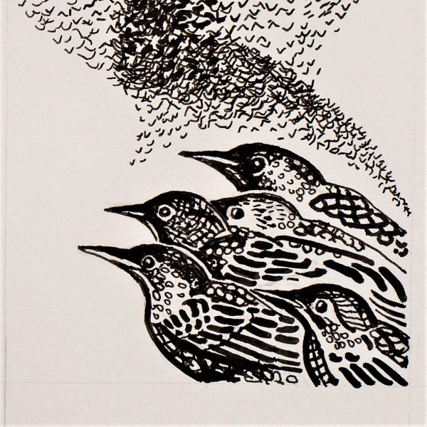 The Starlings - Sarah Longley