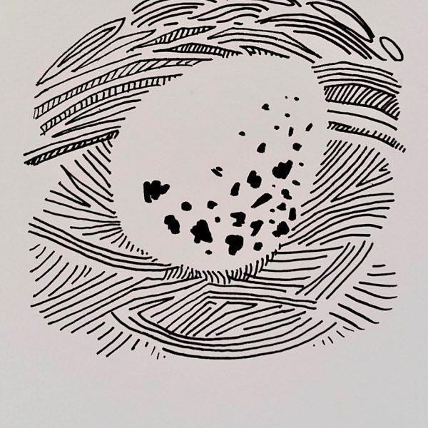 The Siskin's Egg - Sarah Longley